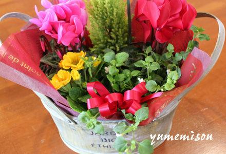 ミニシクラメンの花かご