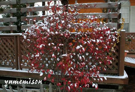 紅葉がきれいなブルーベリー