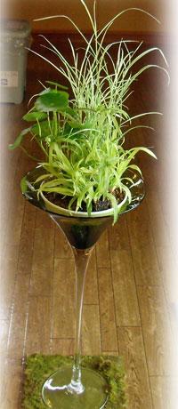 水生植物を生けてみました。