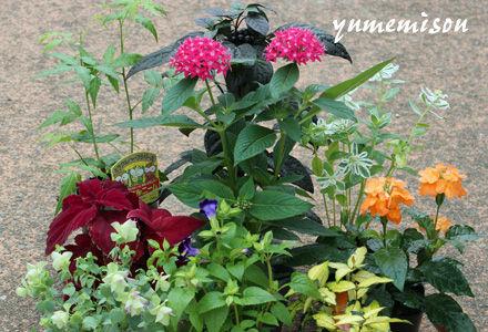 寄せ植え用花苗セット