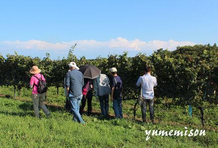 能登ワインのぶどう畑を見学