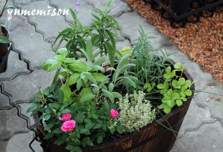 花とハーブのコンテナガーデン