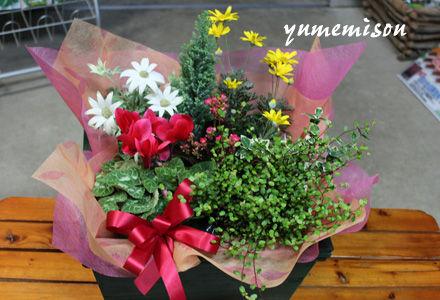 ギフト用花かご