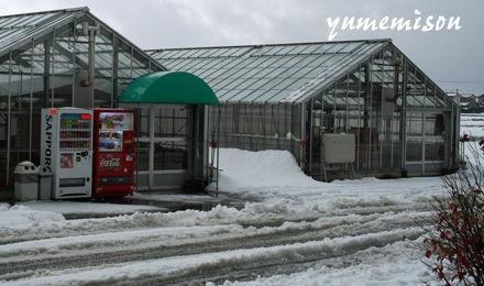 二日続けて雪が降りました