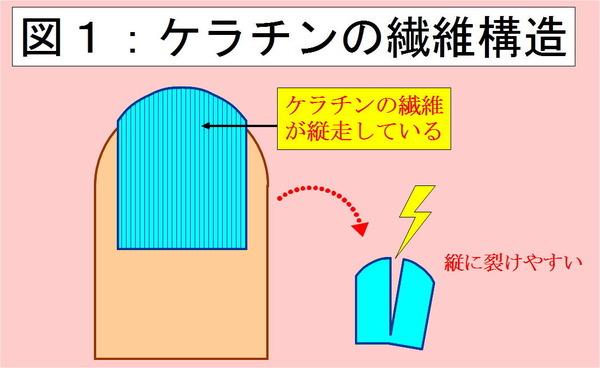 ケラチンの繊維構造
