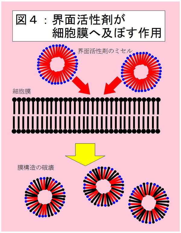 界面活性剤が細胞膜へ及ぼす作用