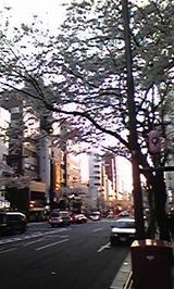 東京の桜②