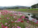 三納川花見会④