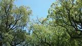 2012夏の楠並木通りからの空
