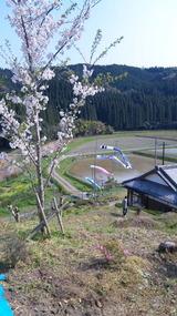 徳之峰の春H23