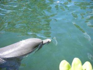211 dolphin