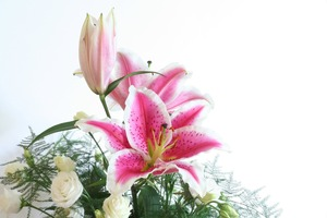 lily-407585_1920