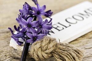 hyacinth-772565_1280