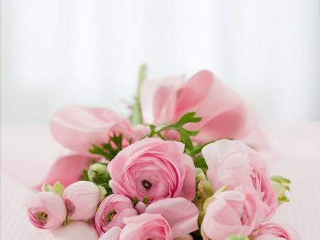 roses-142876_1920