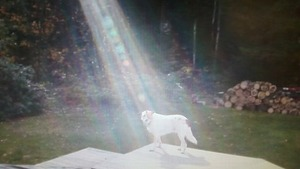 lightbeam on the dog  ABC
