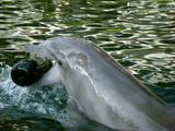 hawaii kahala 2008 dolphin