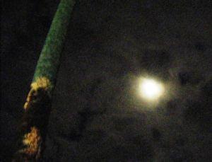 448  web moon