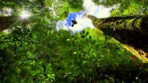 trees-979714_1280