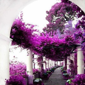 secret garden viollet passage