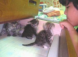 生後26日の子猫と7歳の亜美