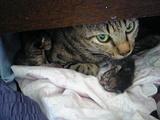子猫とこっちを睨んでいる?ミィちゃん