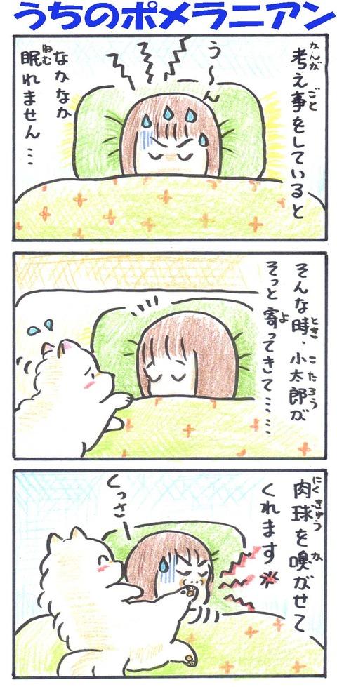 うちポメ324