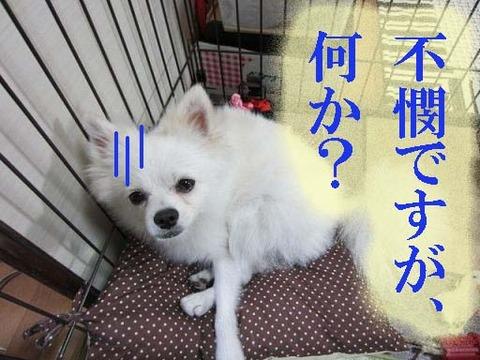 小太郎429-1