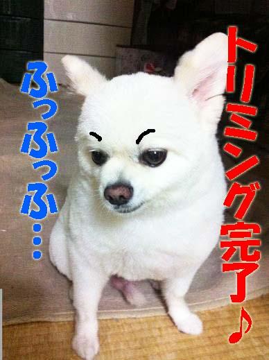 小太郎1005