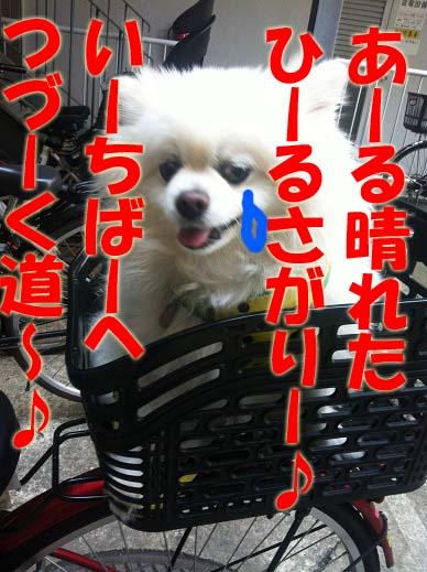 IMG_9941のコピー