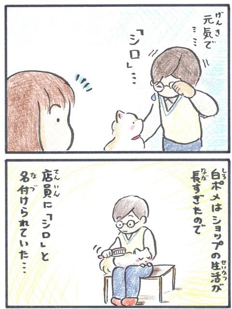 うちポメ3コマ漫画14ブログ用_edited-1