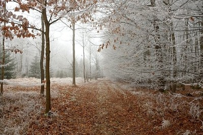 forest-path-2141331__340