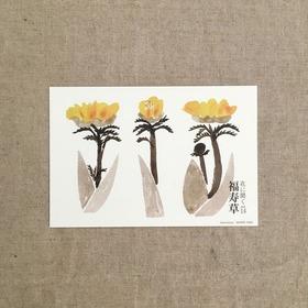 花に聞くvol.14福寿草