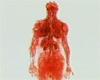 毛細血管の体