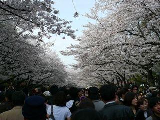 ueno 2011 4-3 008