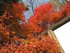 2009.11.29 弥護山 6