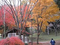 2009.11.29 弥護山 4