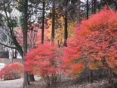 2009.11.29 弥護山 5