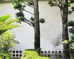 2009.07.08 土蔵 改修工事3 10