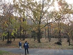 2009.11.29 弥護山 8
