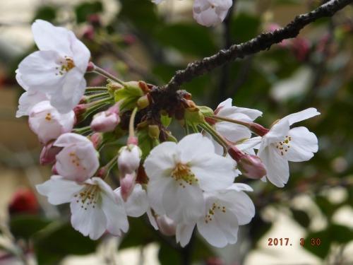 2017-03-30_14383
