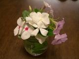 キチョウのための花