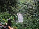 27桜滝も濁流…