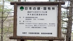 八ヶ岳トウヒ