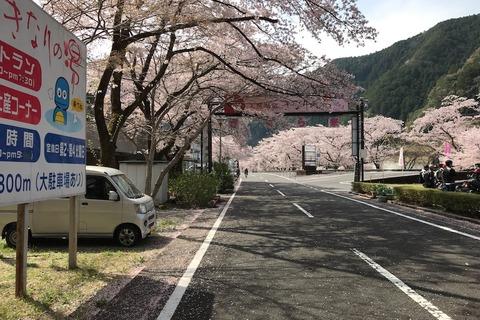 花見と温泉旅行 (9) 最高の桜