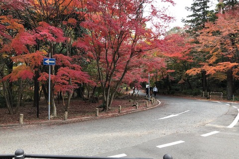ハイキング (3) 鮮やかな紅葉