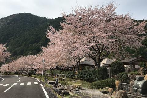 花見と温泉旅行 (8) 北山村へ