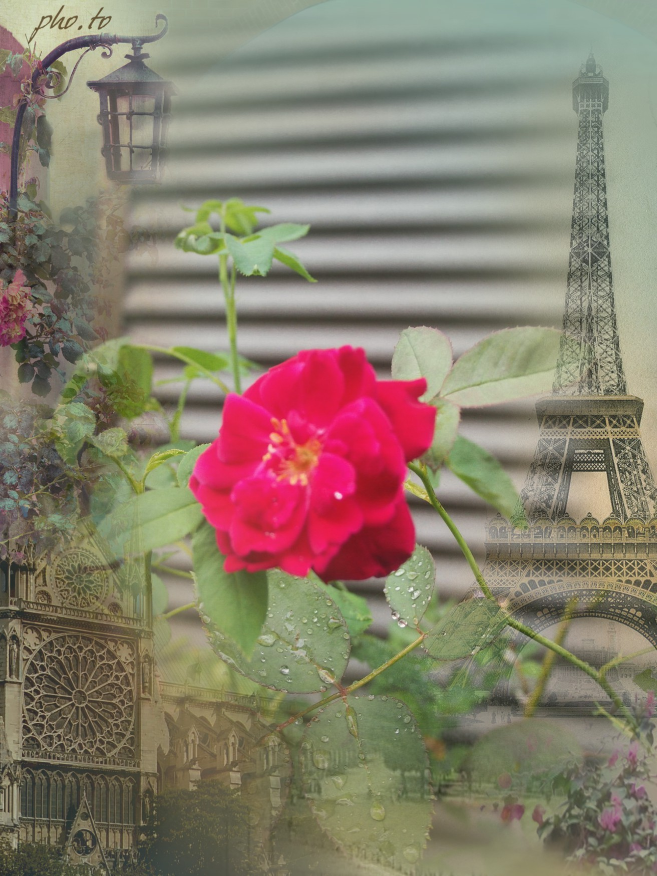 レオナルド・ダ・ヴィンチの画像 p1_18