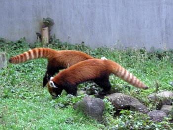 市川動物園3