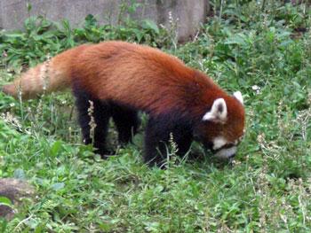 市川動物園2