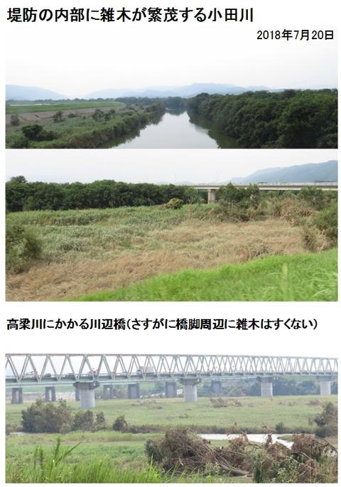 小田川内部の雑木02